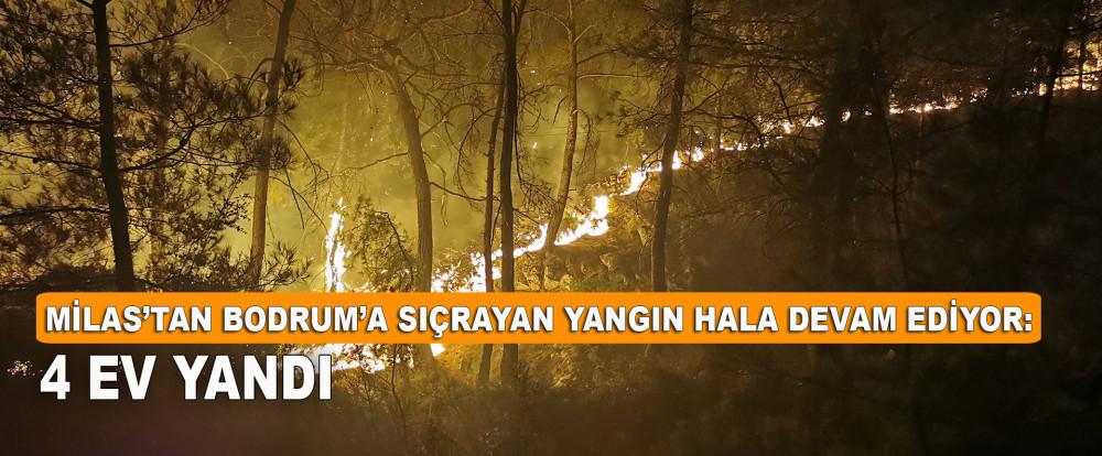 Milas'tan Bodrum'a sıçrayan yangın hala devam ediyor: 4 ev yandı
