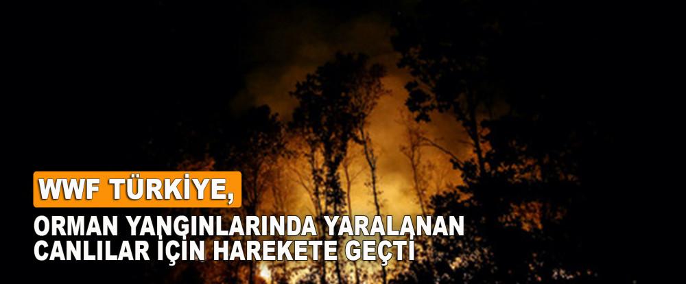 WWF Türkiye, Orman yangınlarında yaralanan canlılar için harekete geçti